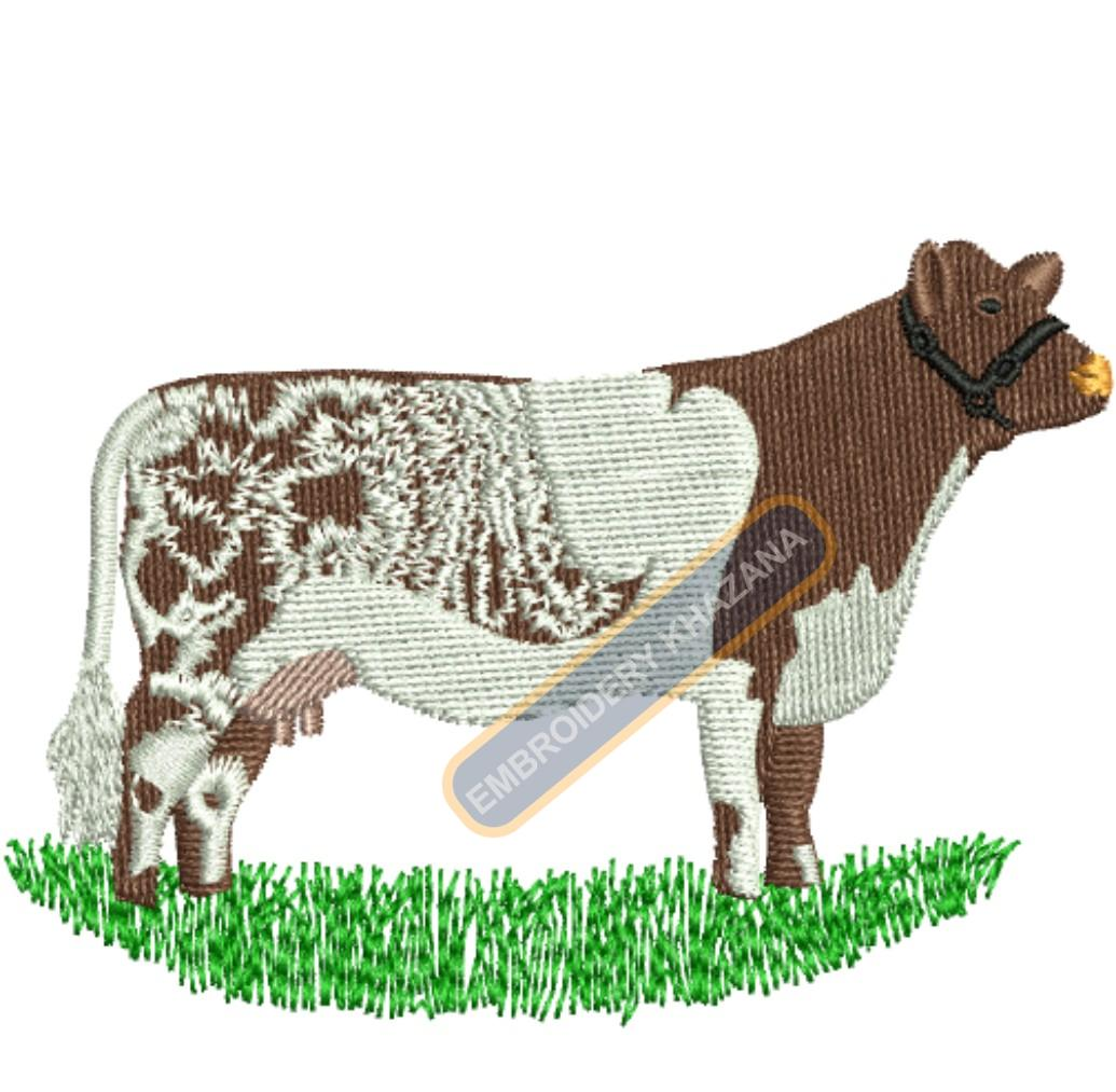 1433926594_Cow Shorthorn.jpg