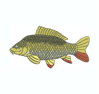 Common Carp Fish Embroidery Design