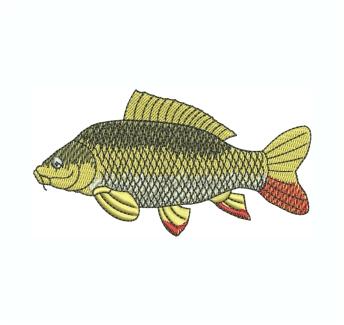 Common Carp Fish Embroidery Design