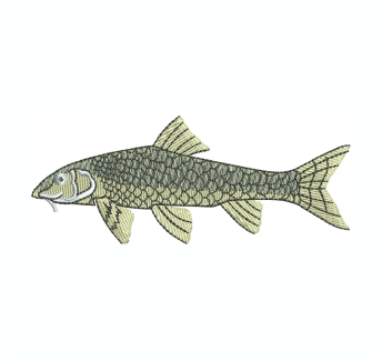 Gudgeon Fish Embroidery Design